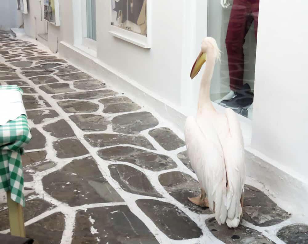 Mykonos, Chora, le Pelican 2015 ©Etpourtantelletourne.fr