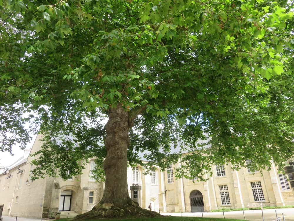 Bayeux arbre de la Liberté 2016 ©Etpourtantelletourne.fr