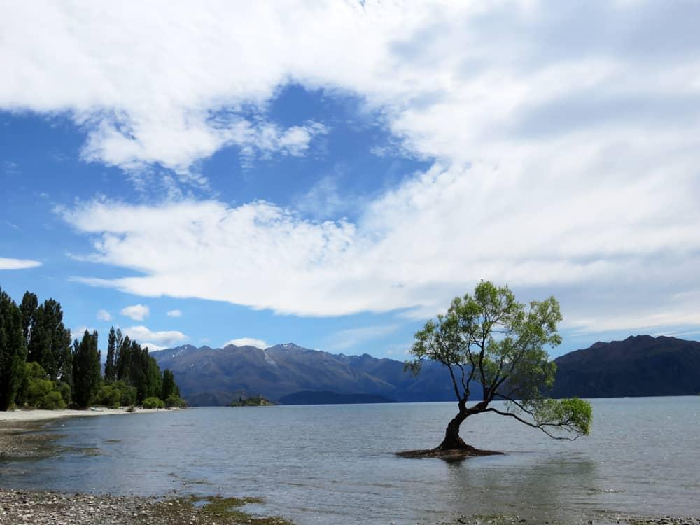 Nouvelle Zélande Wanaka tree 2016 ©Etpourtantelletourne.fr