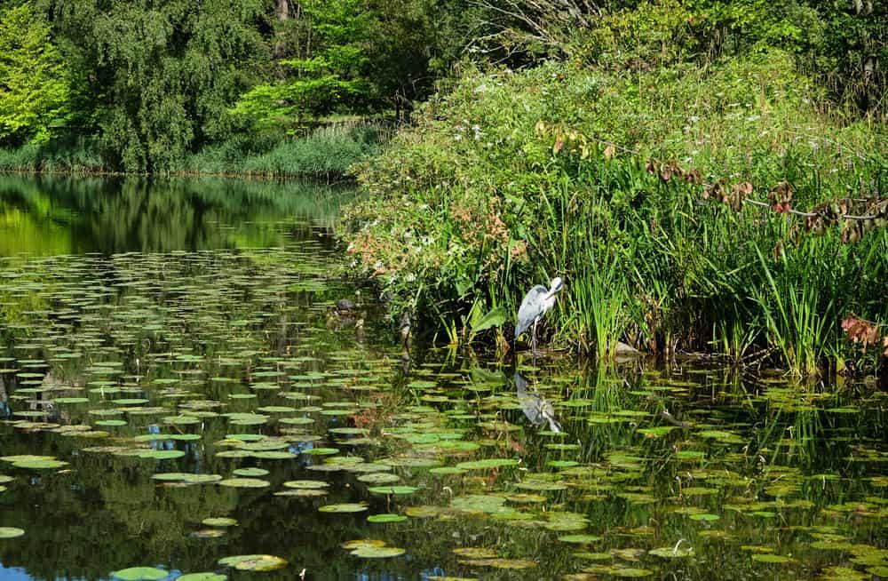 jardin botanique  Copenhague ©Etpourtantelletourne.fr