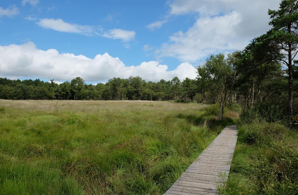 Randonnée autour de l'étang de Paimpont ©Etpourtantelletourne.fr