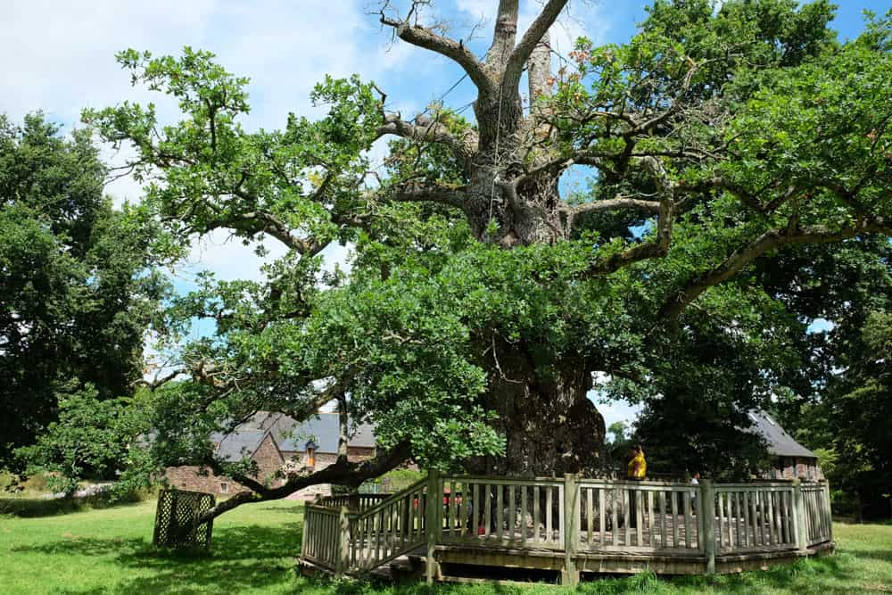 Le chêne à Guillotin Brocéliande ©Etpourtantelletourne.fr