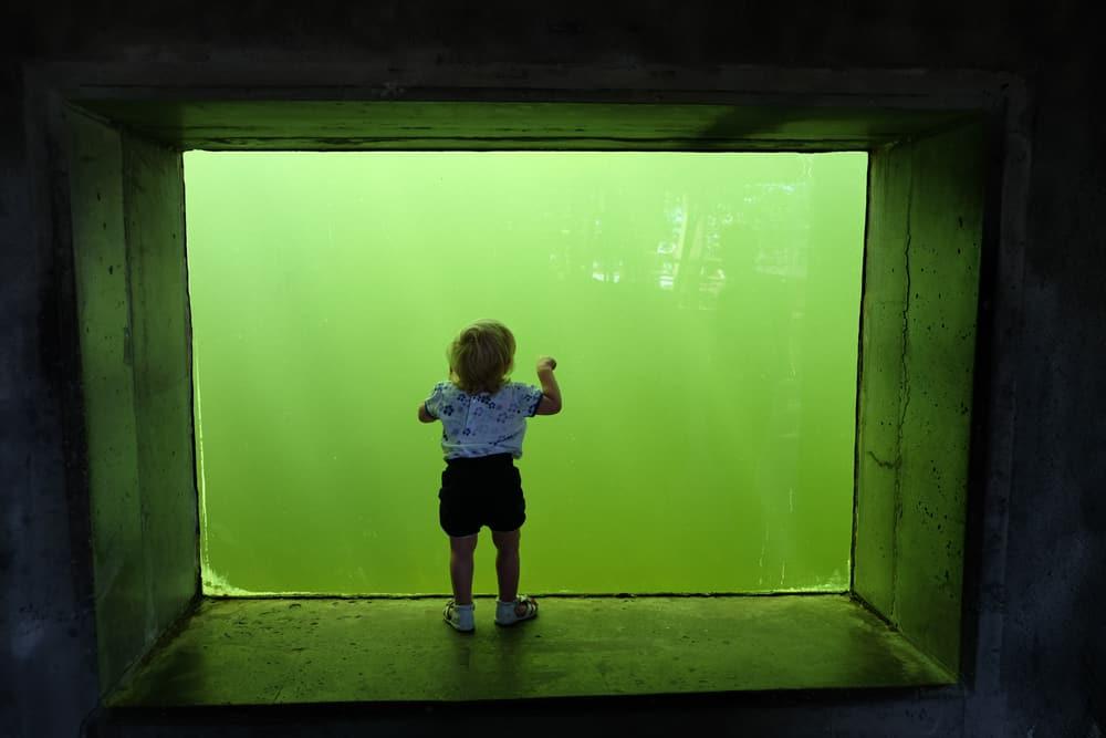 Parc zoologique au musée Skansen en Suède // ©etpourtantelletourne.fr