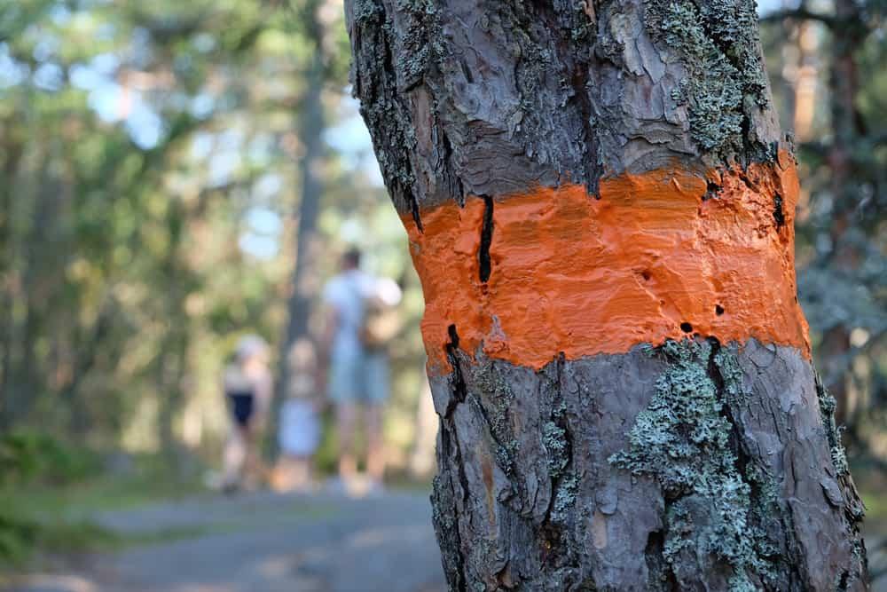 Chemin de randonnée dans la réserve naturelle de Stendörrens  en Suède // ©etpourtantelletourne.fr