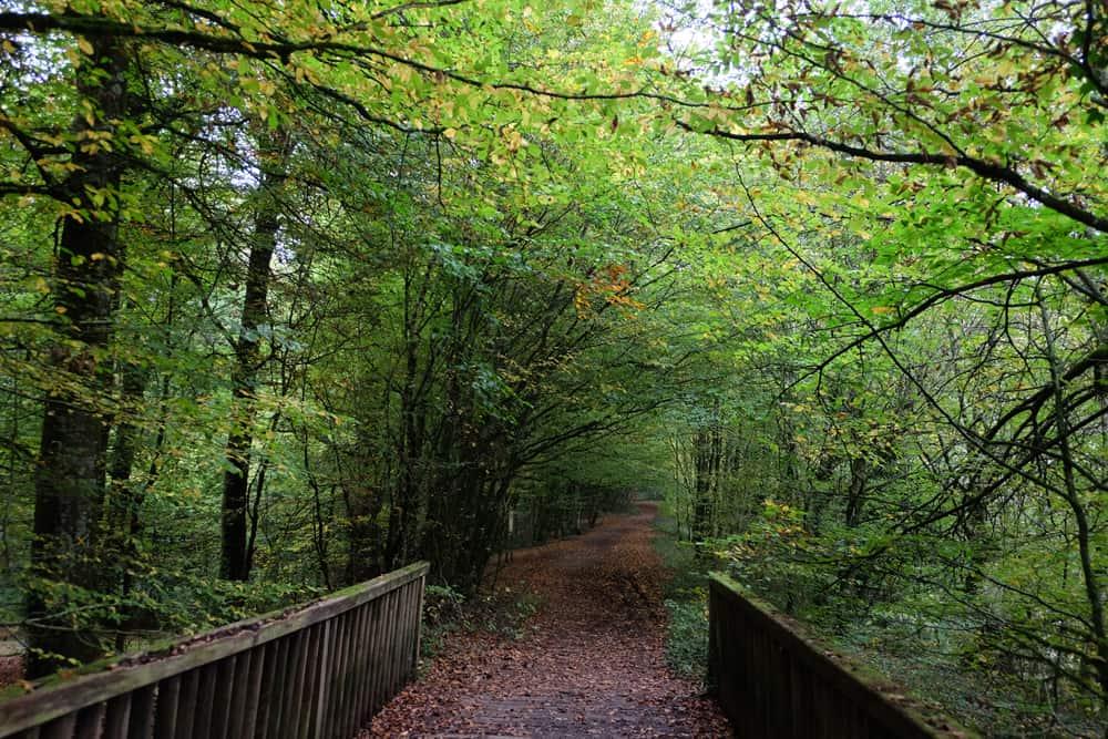 Idées de randonnées près de Rennes : le parcours écologique ded la forêt de Rennes ©Etpourtantelletourne.fr