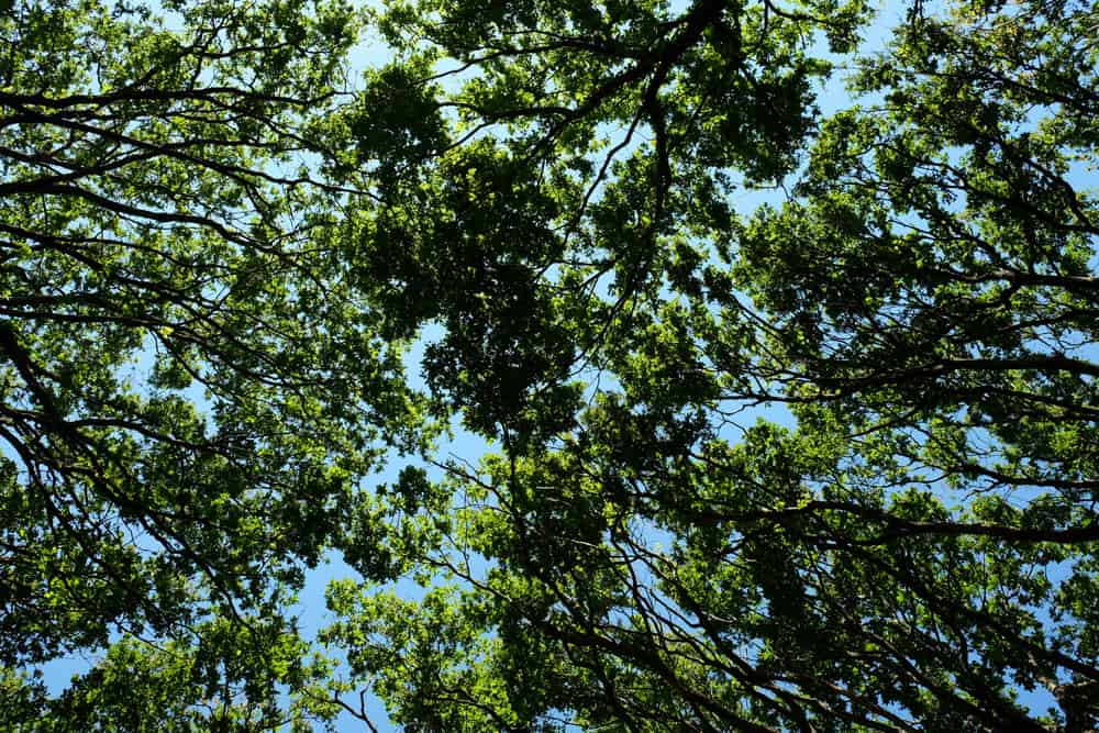 Randonnée en Brière : passage en forêt ©Etpourtantelletourne.fr