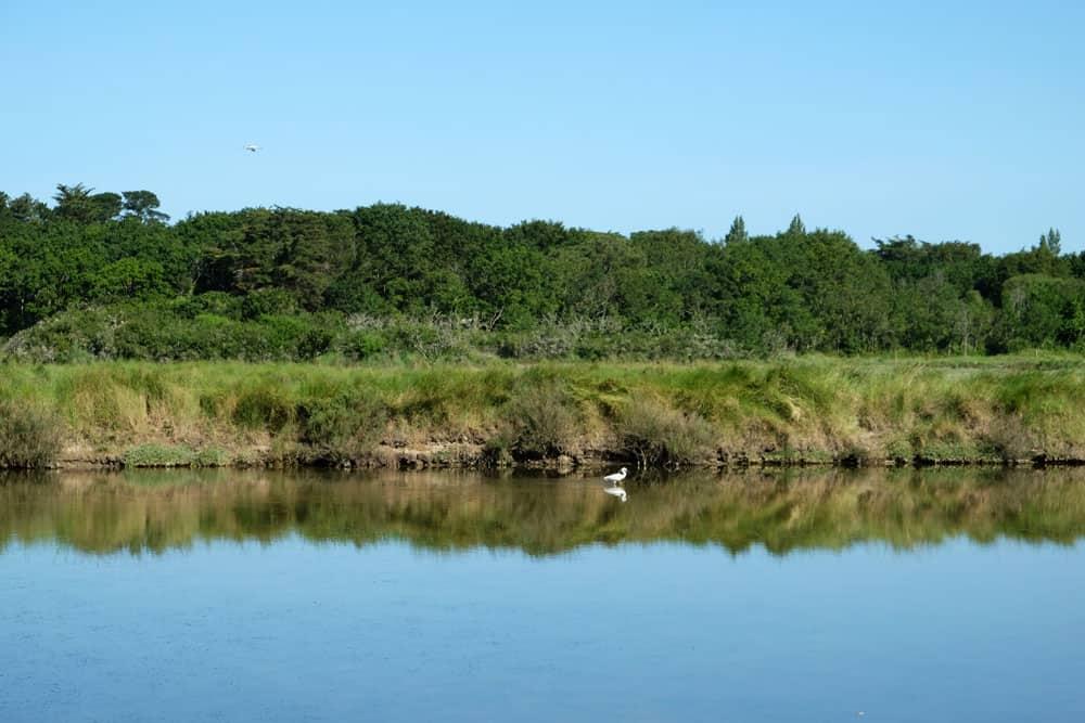 Observation des oiseaux dans les marais salants du Mès ©Etpourtantelletourne.fr